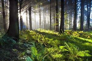 21 reasons why ... Forest Floor Quotes