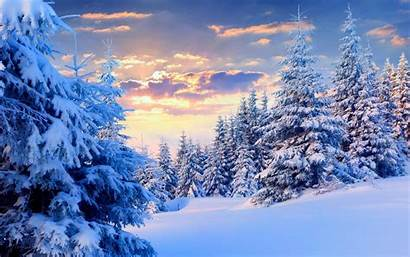 Forest Winter Background Wallpapers Backgrounds Wallpaperaccess