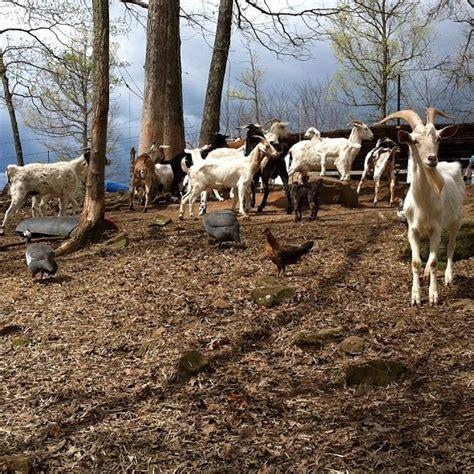 I Love Me Some Goats