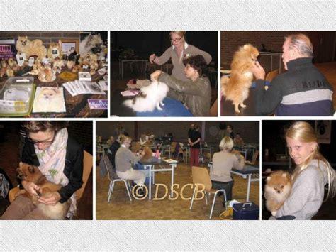 apprendre a toiletter chien deutscher spitz club of belgium www dscb be apprendre 224 toiletter spitz