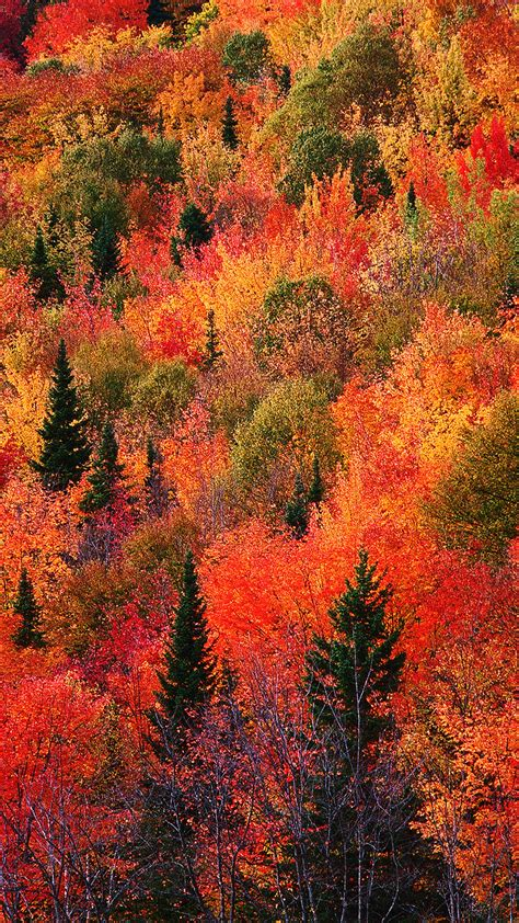 Autumn Wallpapers For Iphone by Colorful Fall Wallpapers Of The Week