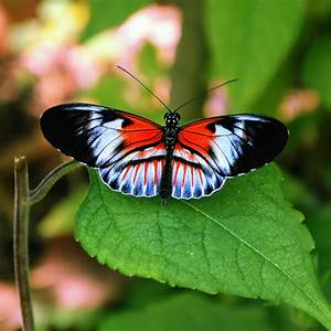 1000+ images about Butterfly and Art on Pinterest ...