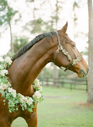 equestrian inspired rustic engagement  wed