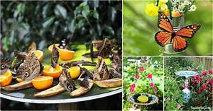 10 Diy Butterfly Feeders That Will Add Beauty And