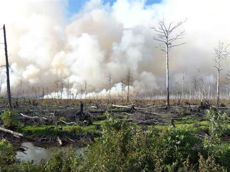 รูปภาพฟรี: ไฟตก ป่า ด้านข้าง