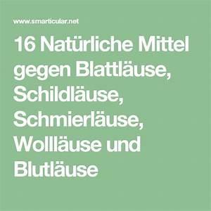 Was Hilft Gegen Blattläuse : die besten 25 schildl use ideen auf pinterest wolll use ~ Articles-book.com Haus und Dekorationen