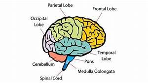 What Are Cerebellar Lesions