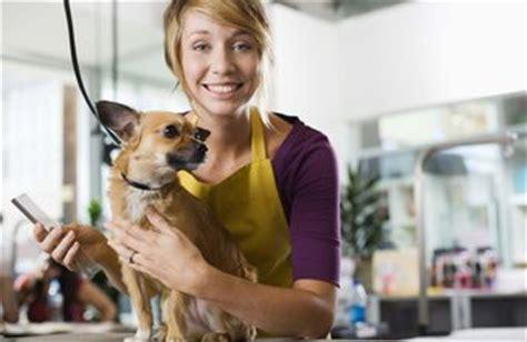 start   dog groomer chroncom