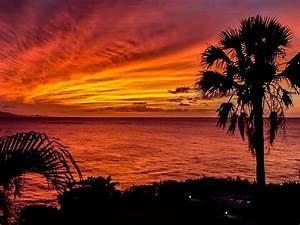 Colorful, Sunset, Palm, Trees, Ocean, Horizon, Romantic, Sunset