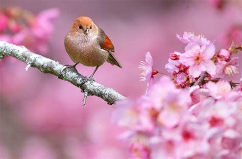 animals nature birds flowers depth  field pink