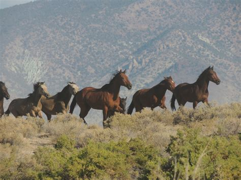 horses colors wild horse they blind gather flickr editor map