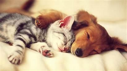 Cat Dog Sleep Animal Pet Shaw Dspc