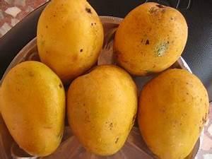National Fruit of India- Indian National Fruit- Indian Mango