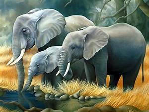 30 Wallpapers of Elephant Photography   Hindi Motivational ...
