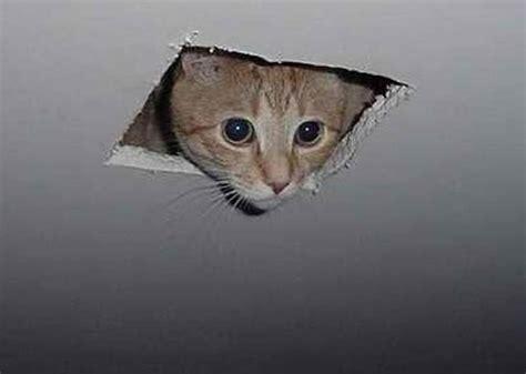 Ceiling Cat Meme - replies