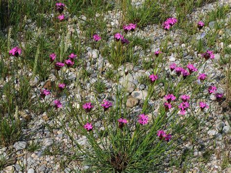 Winterharte Pflanzen Balkonkästen by Winterharte Pflanzen Liste Exotische Pflanzen Liste 85