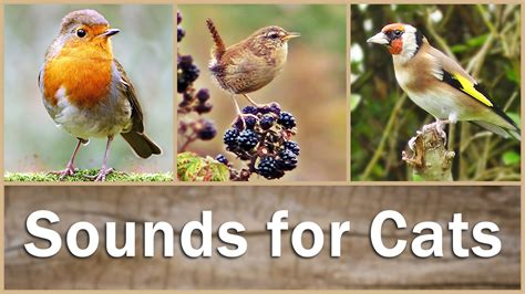 sounds for cats to listen to birds in hd 9 hours of