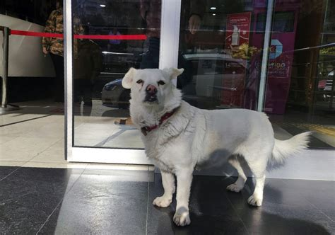 Dog Waits For Owner Outside Turkish Hospital For Days