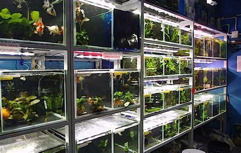 s aquatic design centre is an aquarium store that has it all fish local fish