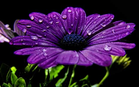 hd cool beautiful water purple 39 high definition purple wallpaper images for free