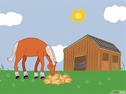 Horse Breathing Problems Manage Hay Step Feeding