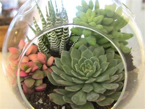 how to plant succulents indoors indoor succulent plants garden ideas pinterest