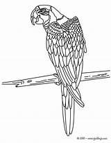 Coloring Macaw Bird Colorear Dibujos Papagayo Parrot Hellokids Para Dibujo Rainforest Sheet Adult Pintar Guacamaya Animal Printable Sheets Butterfly Lesson sketch template