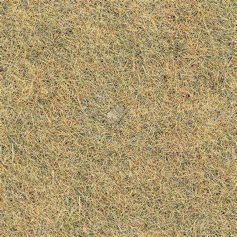 Dry grass texture seamless 12932