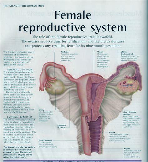Many Ladies Used To Misunderstand The Implantation