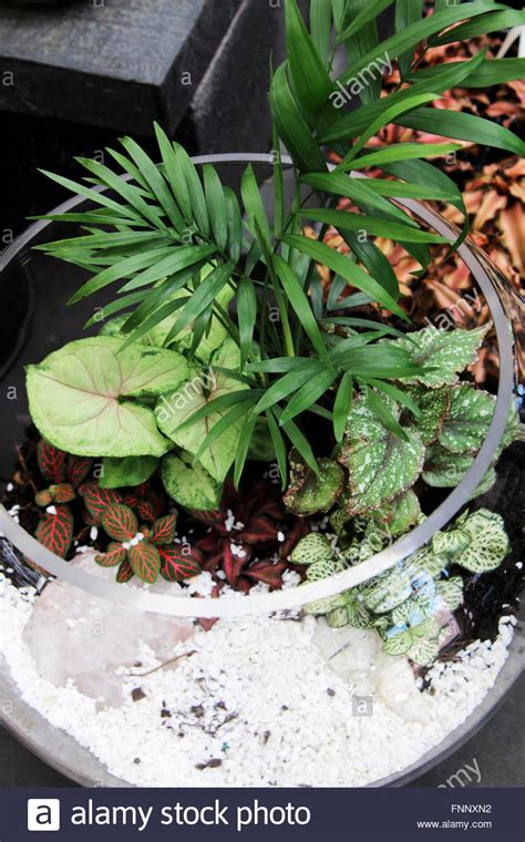 Terrarium Im Glas by Terrarien Mit Pflanzen Im Glas Stockfoto Bild 99441582