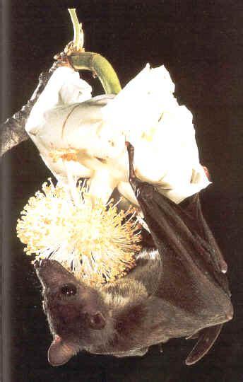 kidzone bats