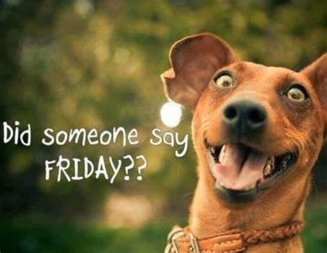 Friday Dog Meme - happy friday jokes of the day 48661
