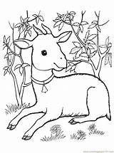 Goat Coloring Pages Printable Baby Animals Coloringpages101 Print Getcolorings sketch template