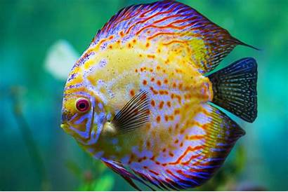Tropical Wallpapers Fishes Fish