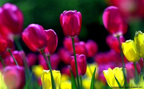 Spring Flowers Screensavers Wallpaper  Free Best Hd