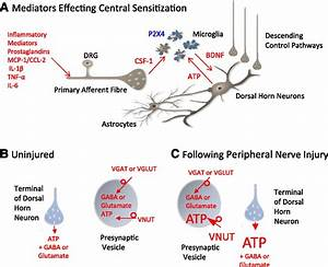 Etiology And Pharmacology Of Neuropathic Pain