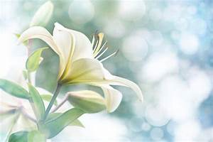 White Flowers - Flower Meaning