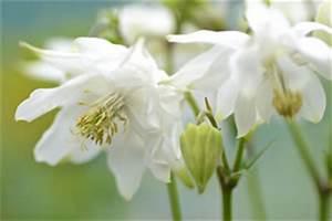 Sommerblumen Für Schatten : schattenblumen blumen und pflanzen f r schattige ~ Michelbontemps.com Haus und Dekorationen