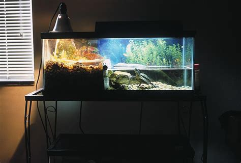 how to keep turtle tank clean keeping the water in your turtle tank clean