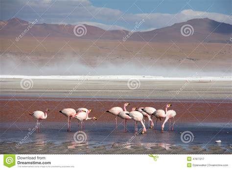 Atacama Desert Stock Image Image Of Driest Landscapes