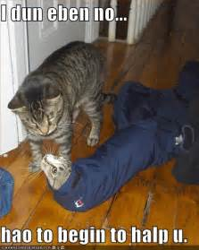 do cats understand words pictures cat does not how to help his friend1