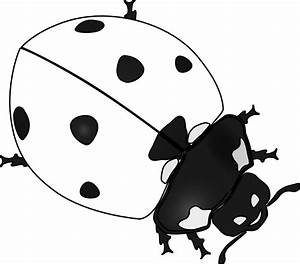 ladybug 20 black white line art tattoo tatoo ... - ClipArt ...