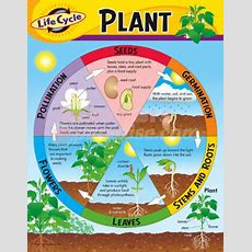 Plant Life Cycle, Watch Sid The Seed, Parts Of A Plant, P