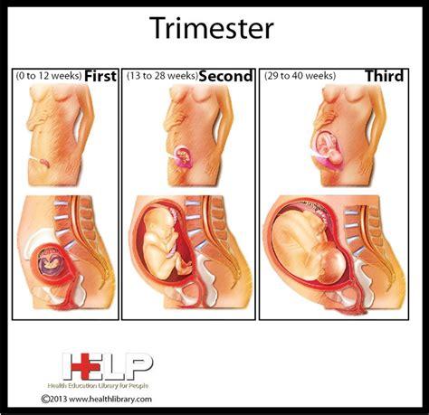 Video Cara Agar Tidak Hamil Tahapan Usia Kehamilan Trimester 1 2 Dan 3