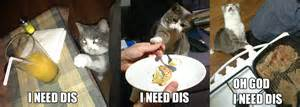 images imthy i need this cat