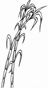 Sugarcane Cane Sugar Drawing Clipart Clip Bamboo Drawings Paintingvalley sketch template