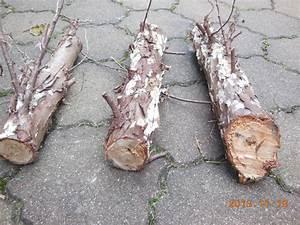 Weißer Schimmel Auf Holz Gefährlich : fragen an den meister wei er schimmel am thuja stamm ~ Whattoseeinmadrid.com Haus und Dekorationen