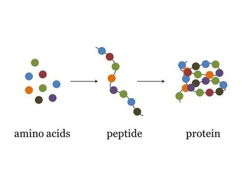 Все ответы на тему Макияж для белочки. Вся информация на BabyBlog.