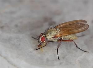 Kleine Fliegen Im Blumentopf Hausmittel : hausmittel gegen fruchtfliegen ~ Whattoseeinmadrid.com Haus und Dekorationen