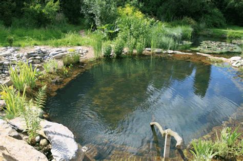 Swimming Pond : Tips On Building Your Own Natural Swimming Pool